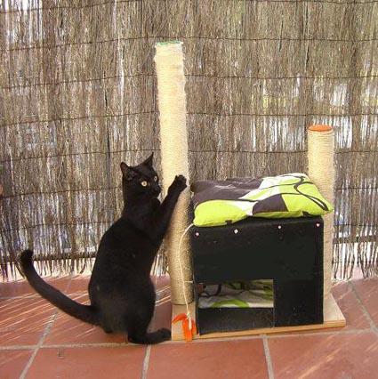 Cama Para Gatos Originales Una Cama Para tu Gato y un