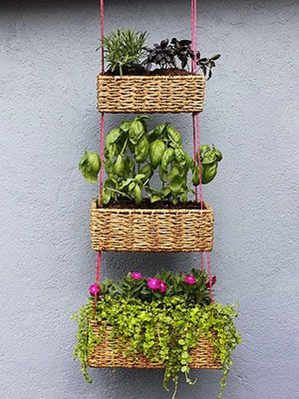 plantas idea maceta