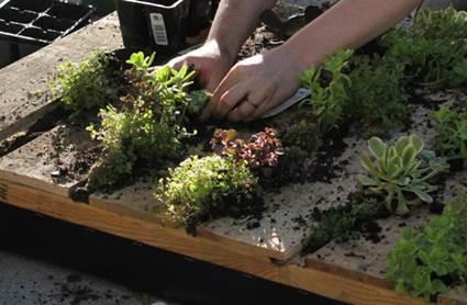Cómo hacer un jardin vertical casero